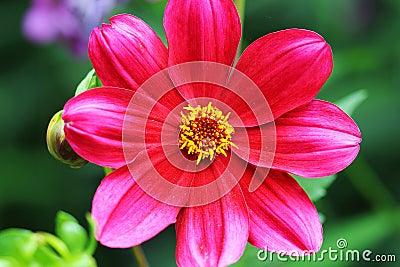 A flower garden beautiful red