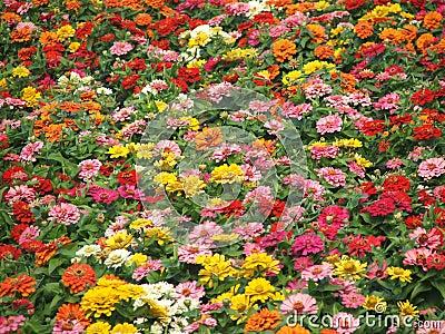 Flower-Garden Bed