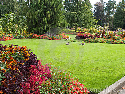 Flower garden with geese on lawn