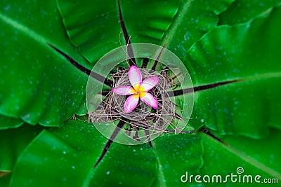 Flower in giant plant