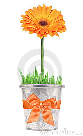 Flower gift in a pot