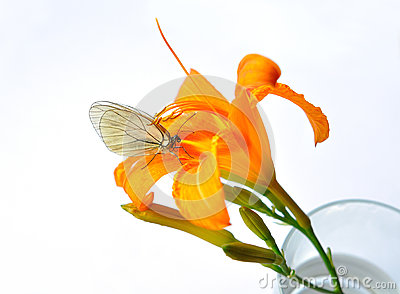 Flower in glass and perched butterfly