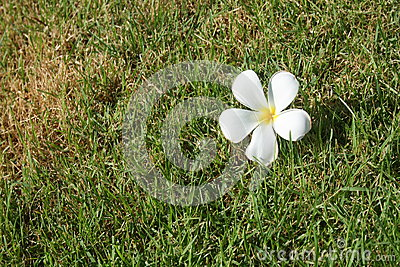 Flower on grass