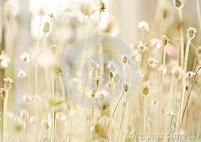 Flower grass at relax time