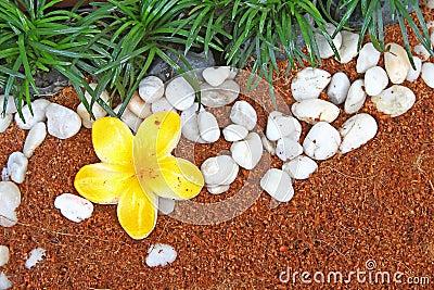 Flower Grass Rock texture
