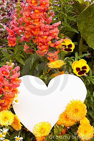 Flower greetings from heart