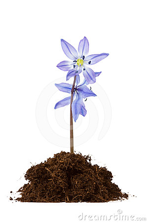Flower grow in the soil