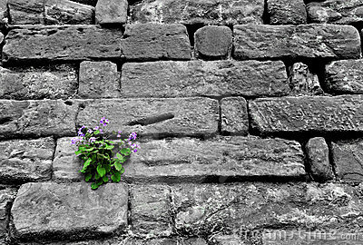 Flower growing on a rock wall