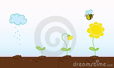 Flower growing stages