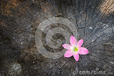 Flower growth up on dead tree stock photo image 53254181 - Successful flower growing business ...