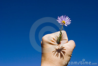 Flower in hand up