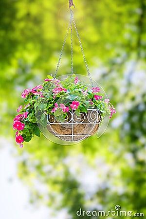 Free Flower Hanging Basket Stock Image - 89649681