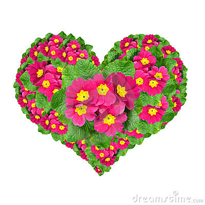 Free Flower Heart Stock Photos - 17753503