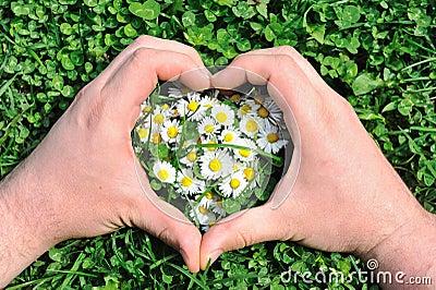 Flower heart in grass