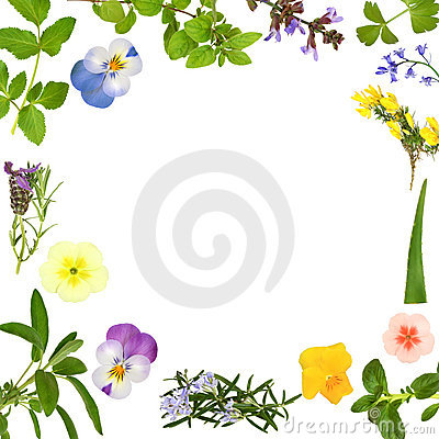 Flower and Herb Leaf Abstract