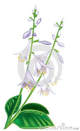 Flower host