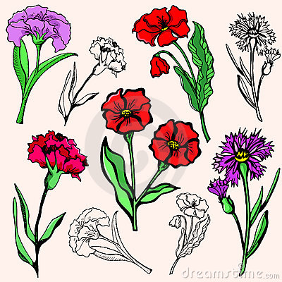 Flower illustration series