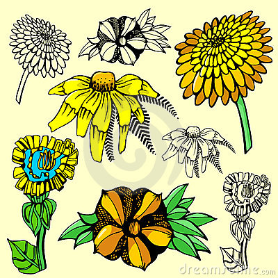 Flower illustration series