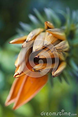 Flower in July