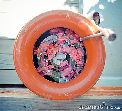 Flower in lifebuoy