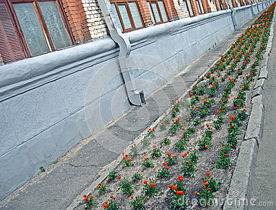 Flower line near industrial building, environment,
