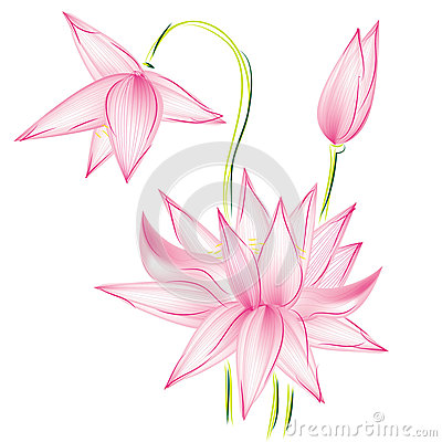 Flower lotus raster