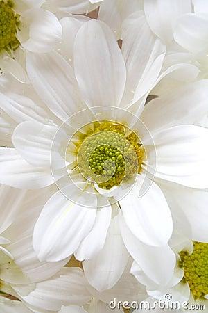 Flower-Macro