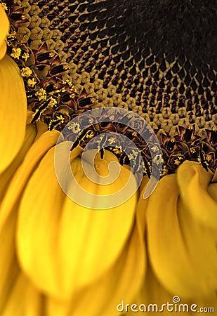 Free Flower Macro Stock Photo - 2738170