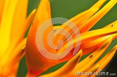 Flower Macro Series 7
