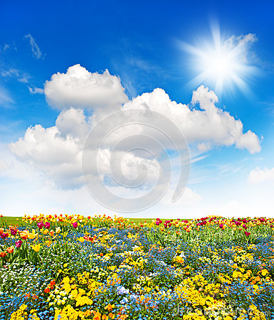 Free Flower Meadow And Green Grass Field Over Cloudy Blue Sky Royalty Free Stock Photos - 54802668