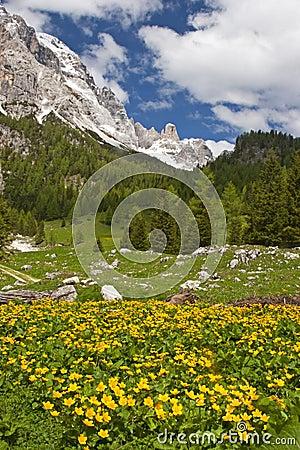 Flower meadow in the dolomites