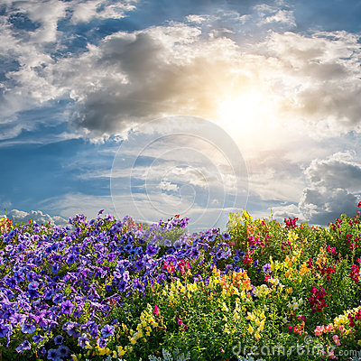 Flower meadow and majestic clouds