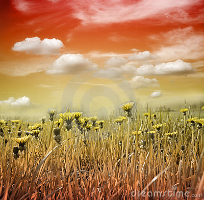 Flower meadow in sunset