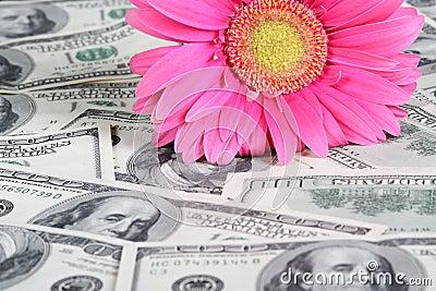 Flower on the money