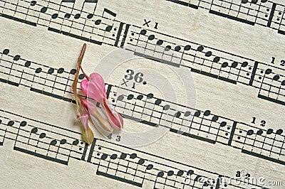 Flower on music sheet