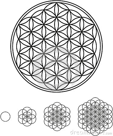 Free Flower Of Life Development Royalty Free Stock Images - 31930919