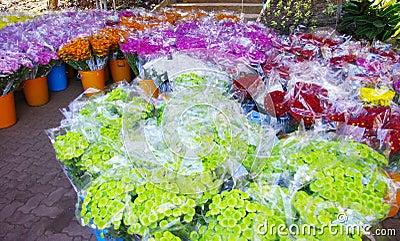 Flower pack for sell