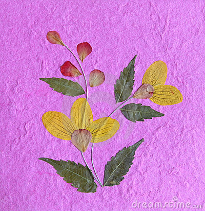 Flower and paper texture