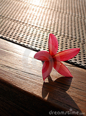 Flower on patio table still life