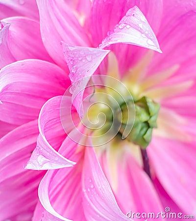 Flower petal.