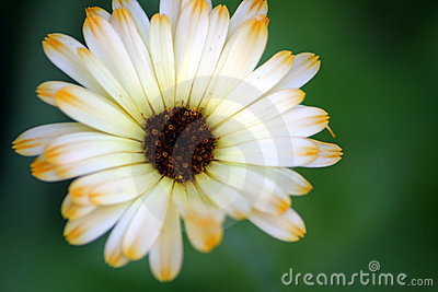 Flower Petals 2