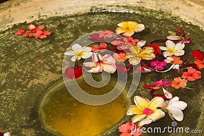 Flower Petals in Water Bowl
