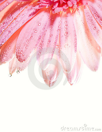 Flower petals with water drops