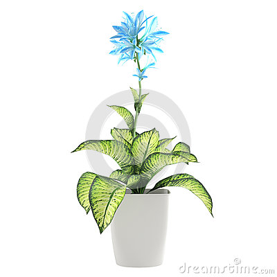 Flower plant in the pot