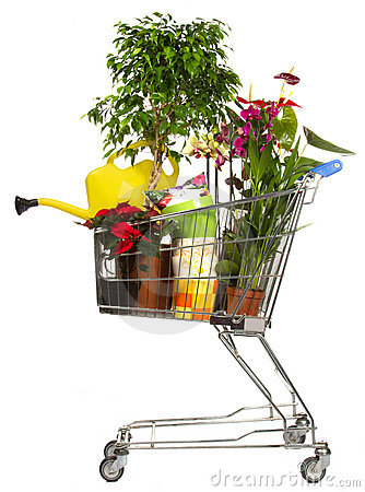 Free Flower Plant Shop Backet Stock Photography - 16930442