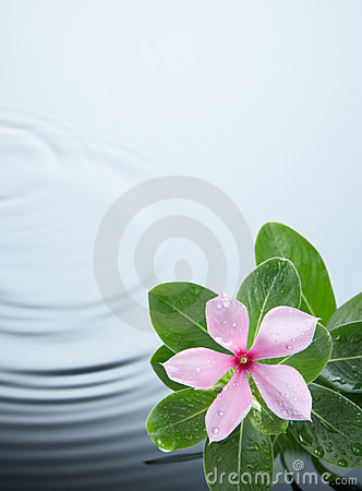 Flower plant and water ripple