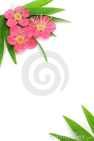 Flower of the plum and bamboo leaf
