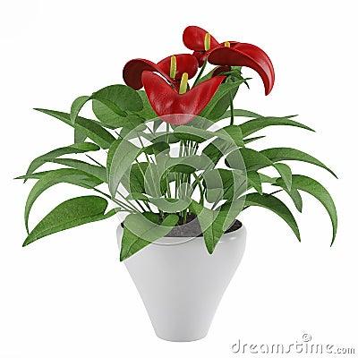 Flower pot calla lilies