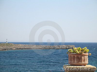 Flower Pot and the Sea