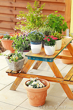 Free Flower Pots Royalty Free Stock Images - 24170459